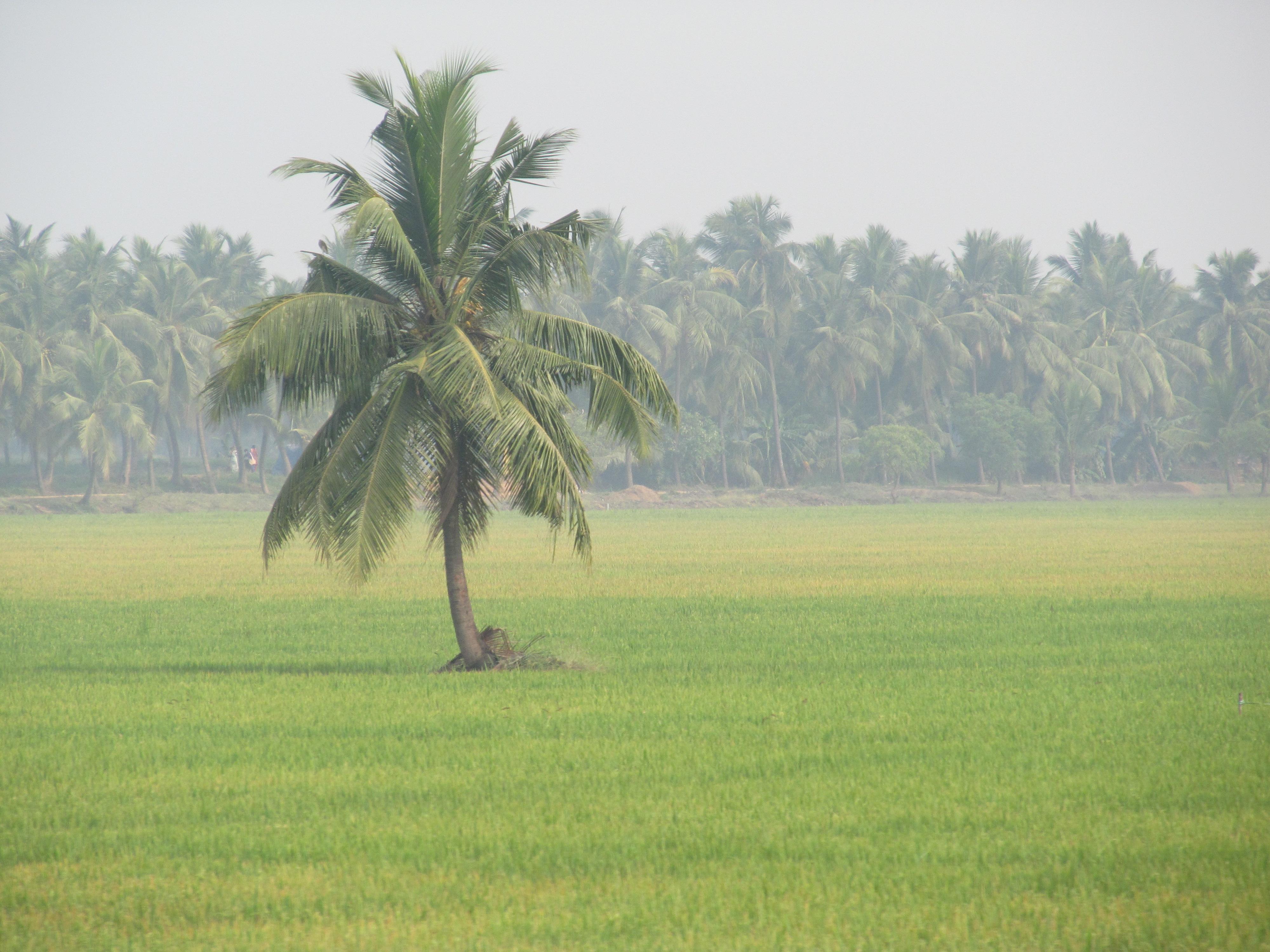 Gold Loan Bhimavaram.