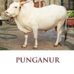 used car loan punganur
